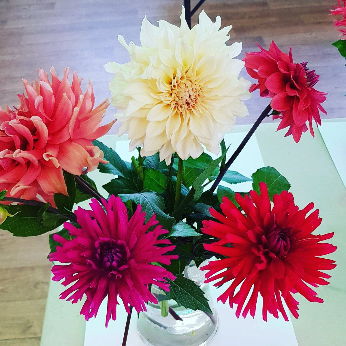 Dahlias hashtag on twitter dahlias on the show bench ready to be judged fingerscrossedpicittersnjhkua1gd izmirmasajfo