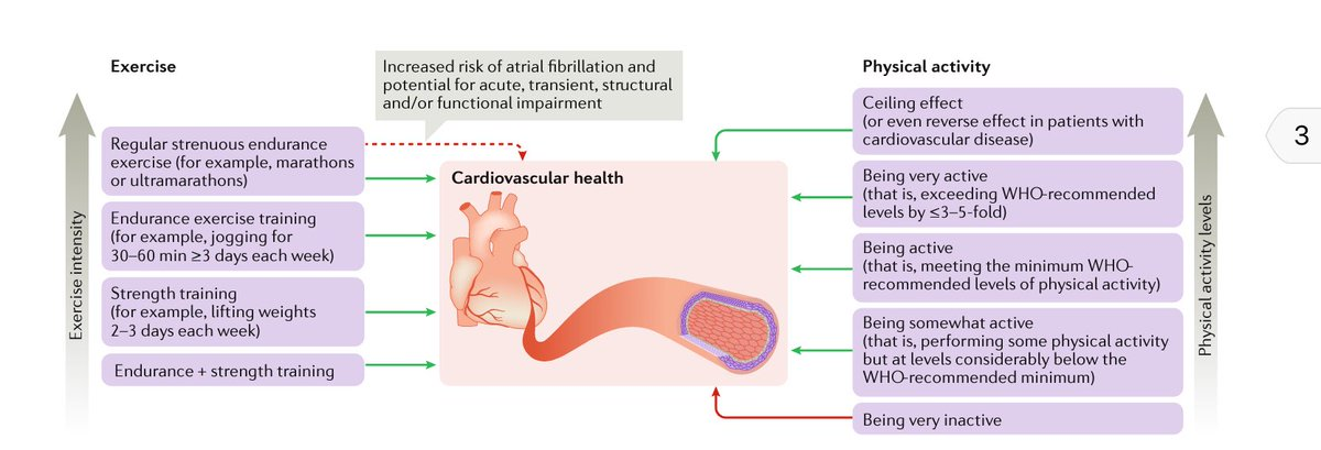 nutrition for patients with cardiovascular disease The preventive cardiology & rehabilitation section offers services to patients with cardiovascular disease and those who have a high risk of developing it individualized programs are designed to reduce risk factors and prevent disease from getting worse.