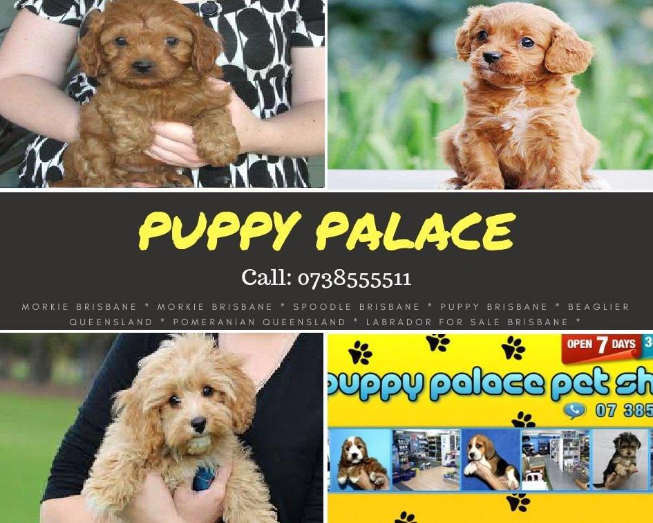 Puppy Palace Pet Shop (@PuppyPalacePet1)   Twitter