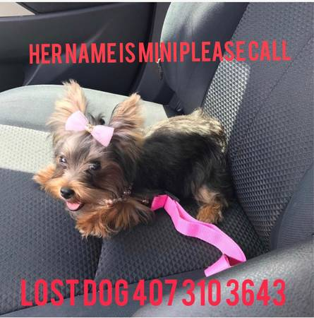 Orlando Lost Found On Twitter Lost Dog Kissimmee Her Name Is
