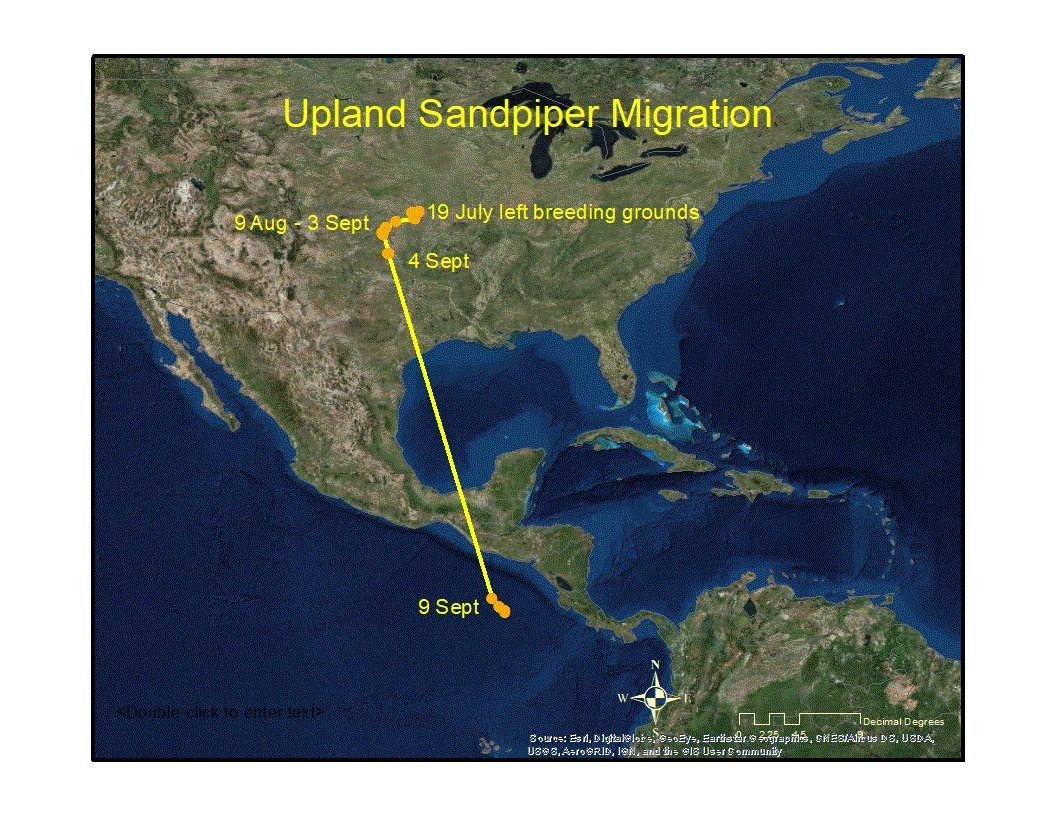 Konza is over the ocean! Konza, the Upland Sandpiper carrying a solar-powered satellite tag, left her pre-migration staging location in Oklahoma on 4 Sept. Track her progress here: vtecostudies.org/blog/live-upda…