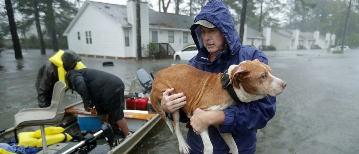 Woman Who Saved Dozens Of Animals From Hurricane Florence Arrested For Not Having Appropriate Licenses trib.al/oYmJLoF
