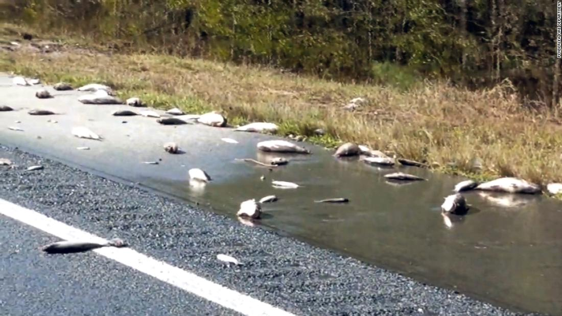 Dead fish scattered on the highway as floodwaters recede in North Carolina https://t.co/4aC83BcVci https://t.co/n4a12S4yy3
