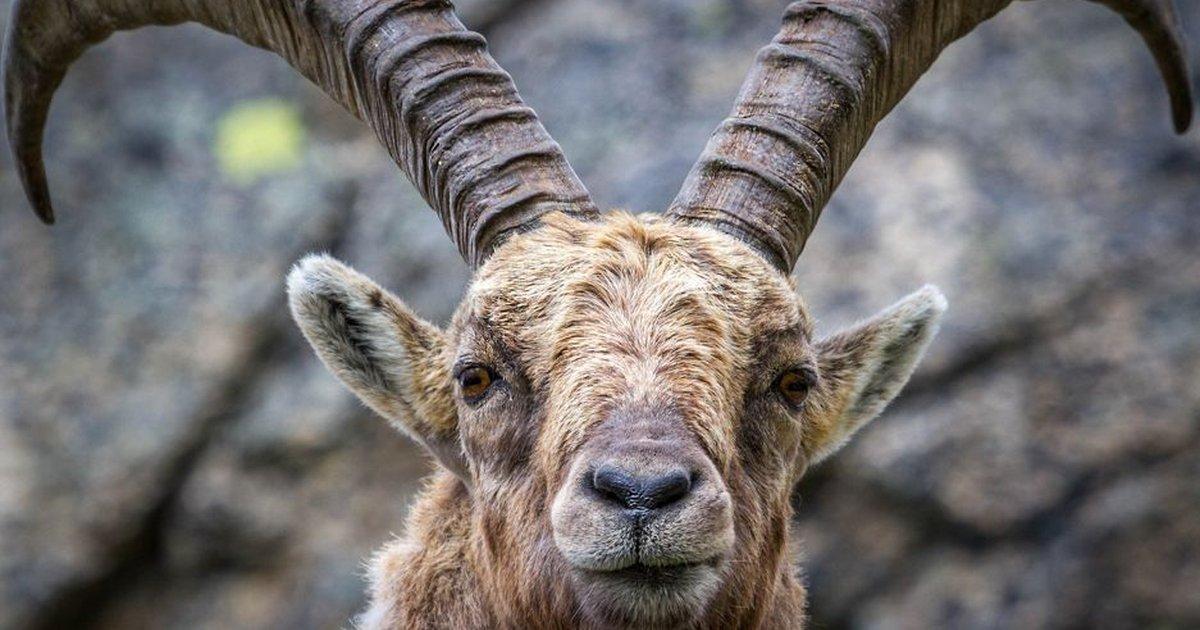 Бессмертие, копыта и еще 8 вещей, в которых люди уступают животным https://t.co/zfVFwcLUfb