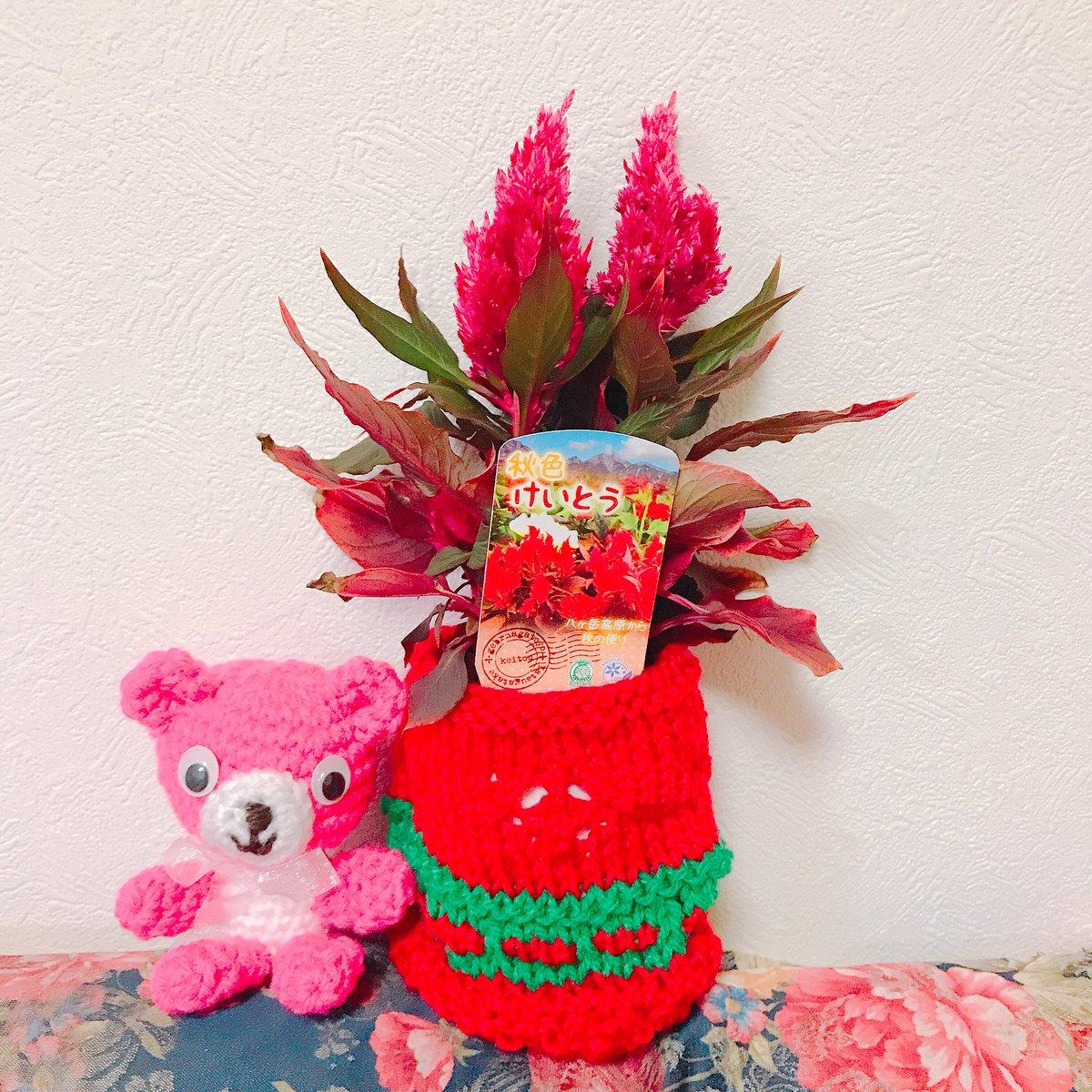 test ツイッターメディア - 柚子の木が虫にやられてしまい、お店に相談しに行ったら可愛いい、けいとう花が目に入り購入??(???) 100円ダイソー糸で鉢カバー 中央の穴は花柄の模様編み写真だと分かり難い…。??  #ダイソー #棒針編み https://t.co/gUTpmNekDR