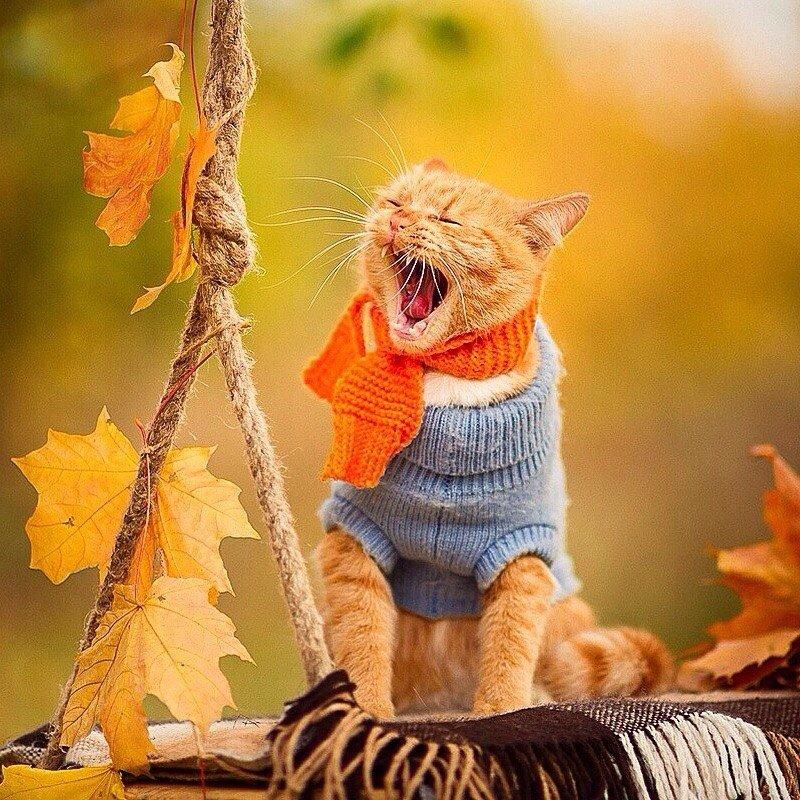 Картинки про осень прикольные
