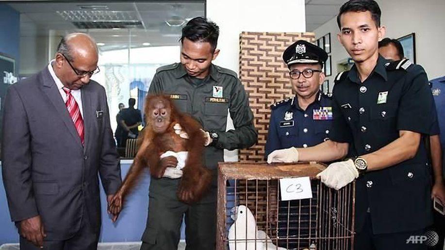 Malaysia Gagalkan Upaya Penyelundupan 400 Hewan, 3 WNI Ditangkap https://t.co/dah3BIsS6g https://t.co/niZPOlTE5s