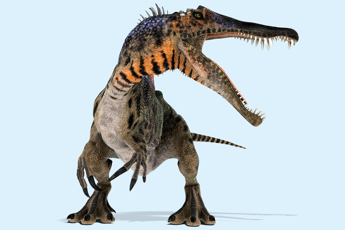 The mystery of the dinosaur with crocodile jaws, bear claws and a sail https://t.co/n2G2BZ4mLu