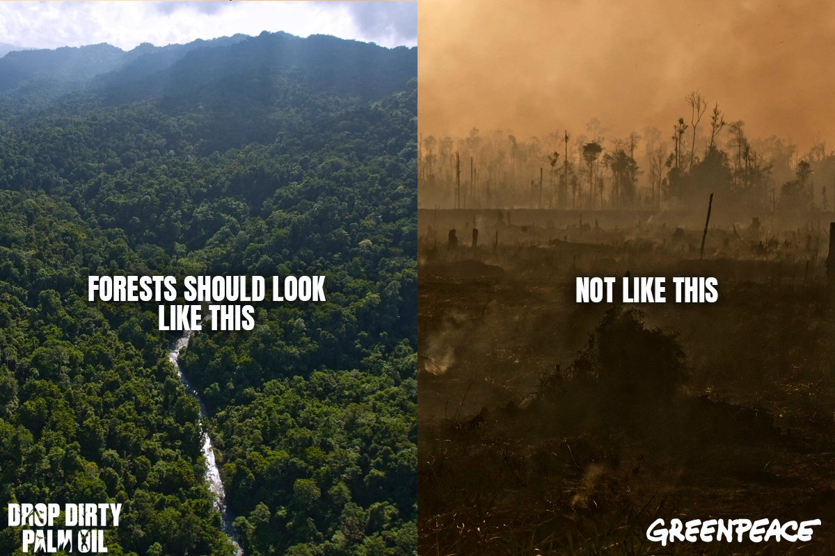 Tell big companies to drop Wilmar and dirty palm oil before it's too late for Indonesia's rainforests https://t.co/9RcXiLcvhf #DropDirtyPalmOil