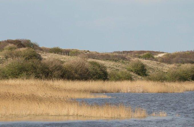 Het Prinsenbos en De Banken benoemd als leukste onontdekte natuurpark van Nederland https://t.co/rEFAeROZXQ https://t.co/ZQiWaeu8vg