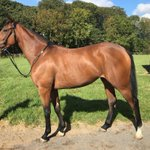 Amliba 2yr old filly, 1/2 sister of 5 time winner RPR 99 & her sister won @ayrracecourse on Thursday. Last few remaining shares trained by @omeararacing