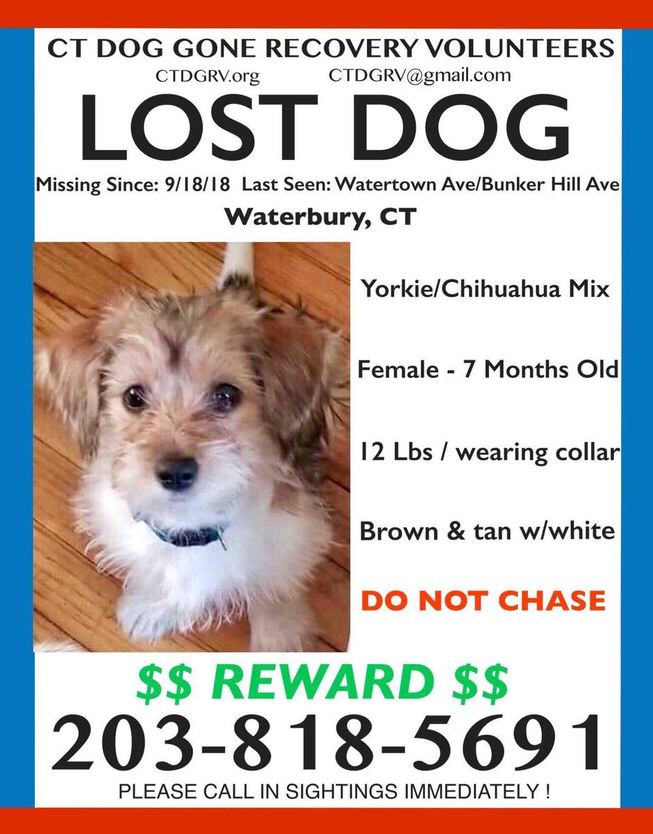 Waterbury: This sweet young pup escaped out of a car and is on the loose in Waterbury. She is frightened, so please DO NOT CHASE HER or pursue her, and instead please call the number on the flyer below immediately if you see her. Thank you! @MyCTCommunity @NicoleNalepaTV<br>http://pic.twitter.com/pcemvSmrFY