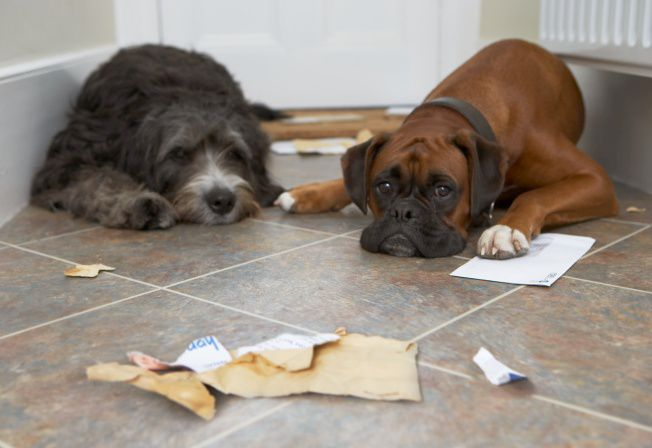 Separation anxiety is one of the most commonly discussed #dogbehavior problems. #petlovers   http:// cpix.me/a/55811288  &nbsp;  <br>http://pic.twitter.com/Mbkgwadlp3