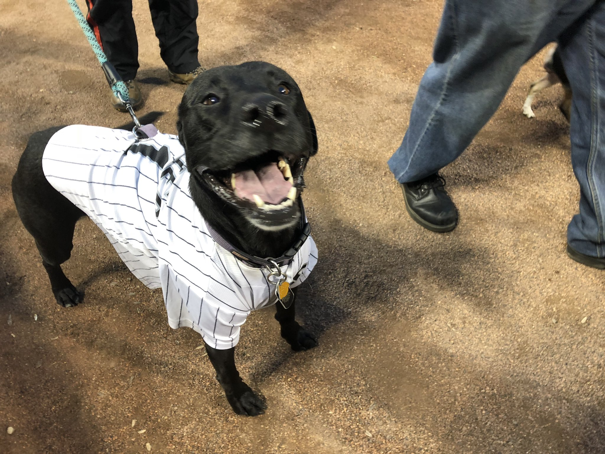 How we all feel on Dog Day. #WhiteSox https://t.co/VMvZ20HHJK