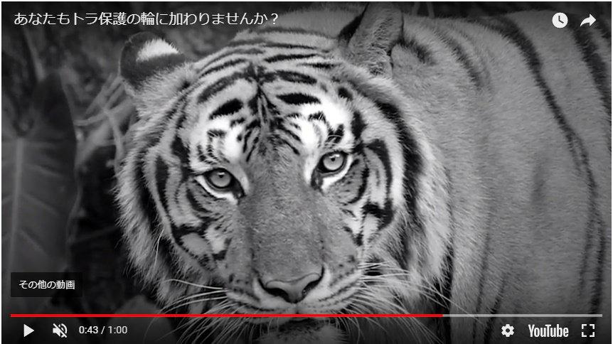 【WWFの活動】「ネパールでトラが10年弱でほぼ倍増」 ビッグニュースです。ネパールでトラが235頭となり、2009年の121頭からほぼ倍に。 絶滅危惧種である野生のトラの数を、次のトラ年である2022年までに倍増させる「T×2」計画を、ネパールが世界で最初に達成しました。音楽付きの動画もご覧下さい。