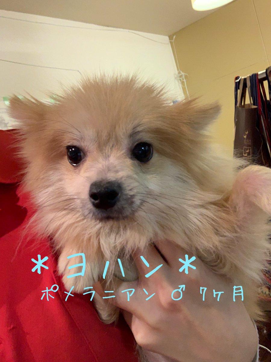 保護犬カフェ 鶴橋店 On Twitter 里親様募集中 本日保護の