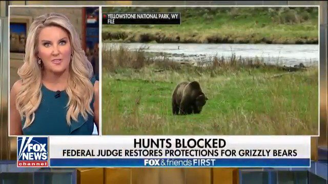 Federal judge restores protections for grizzly bears, hunts blocked https://t.co/gdvAPtzrJ3