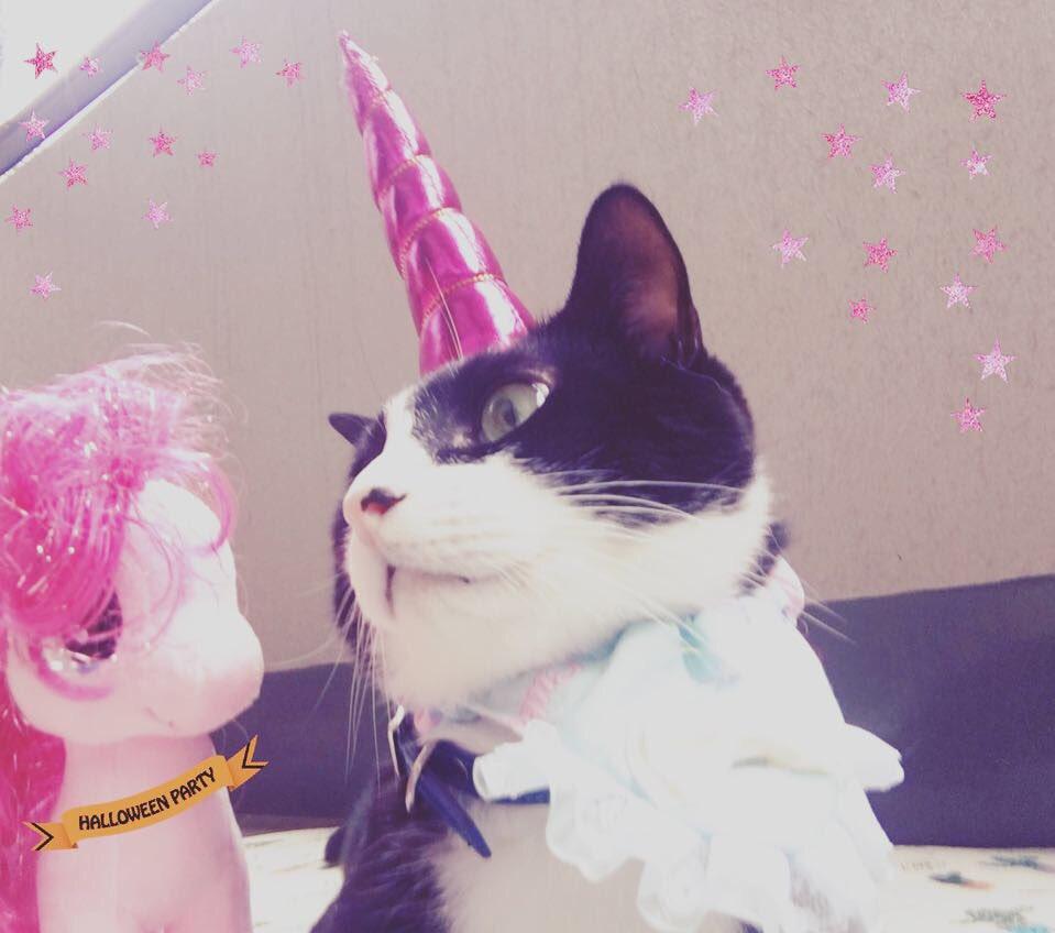 test ツイッターメディア - ゆめかわいい ユニコーンフィガロ????   #ゆめかわいい #セリア #ハロウィン #猫モフー https://t.co/XZ1jLAxWmL