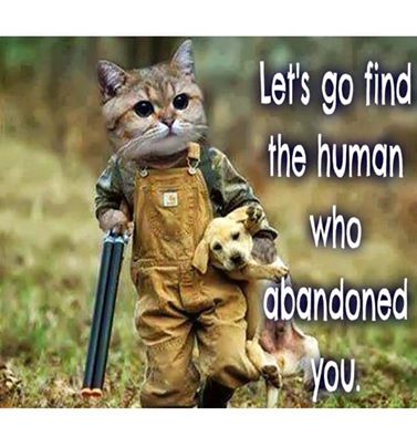 I have no patience with people who abandon their pets like what happened in Hurricane Florence and other disasters. How can you just leave them behind to fend for themselves. These people should never be allowed to own another one period end of story!