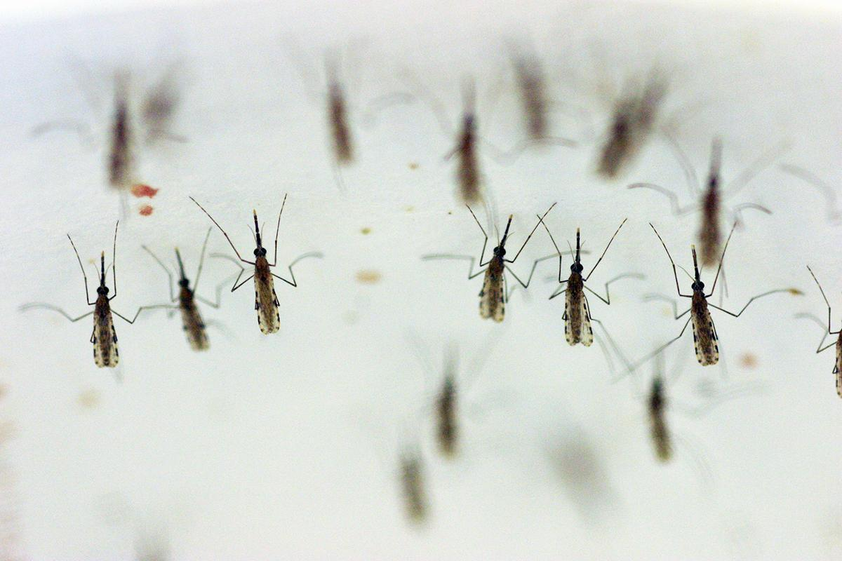 Evolution-defying DNA makes mosquitoes infertile by changing their sex https://t.co/7Ko2varAjr