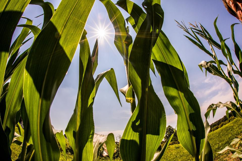 Tech startup Indigo Agriculture makes seed treatments that help plants grow https://t.co/SjAQsgjnQ8 https://t.co/Bz8HJKLVck