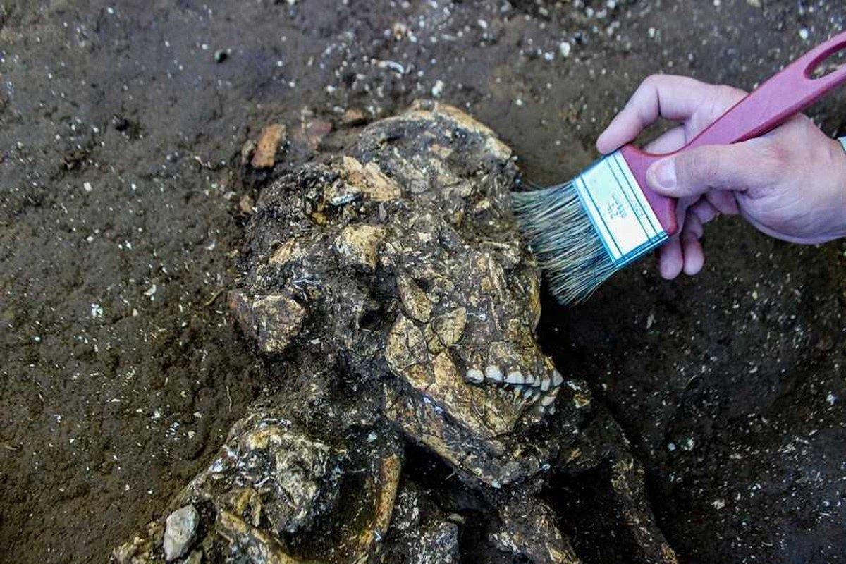 Esqueletos encontrados em obras de duplicação de estrada em SC têm 5,8 mil anos de idade https://t.co/P8TljsmkE3 #G1 #G1SantaCatarinaSantaCatarina