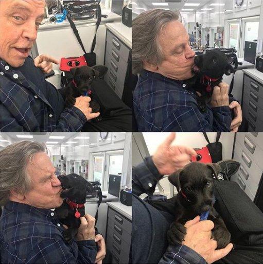 O aniversário é dele, mas o presente quem ganhou foi a gente com essa fotos FOFÍNEA do @HamillHimself beijando seu doguinho.   Luke, comemorar você deve. Parabéns! 🎂