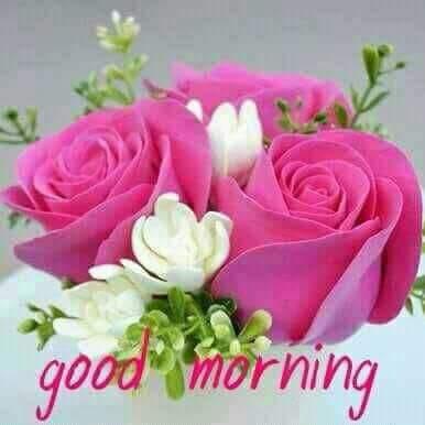 सुबह का नमस्कार सभी को 🙏 #GoodMorningIndia #FridayFeeling Photo