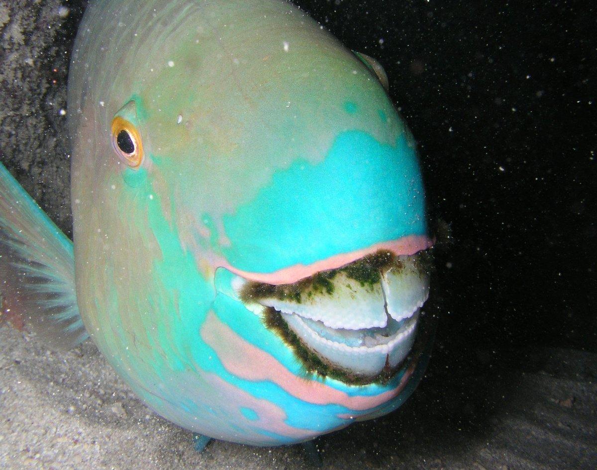 أسماك هاواي