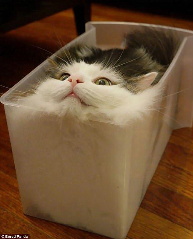 @jk_rowling ha preso spunto dai gatti per l'Occamy?  #FantasticBeasts  (Animale aggiusto-spazioso)  - Ukustom