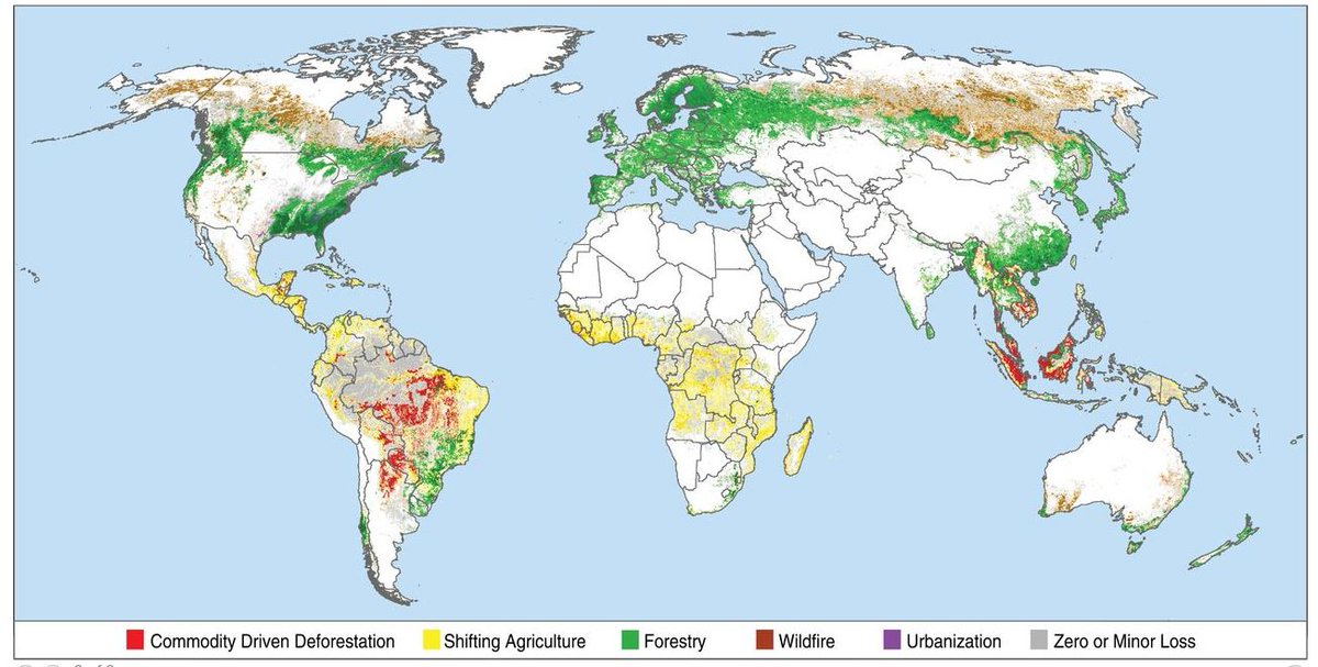 Globally, ≈ 27% of all #ForestDisturbance 2001-2015 was associated with commodity-driven #deforestation, predominantly in the #tropics. That is the #beef you eat, the #soy fed to animals you eat, and the #PalmOil in processed food science.sciencemag.org/content/361/64…