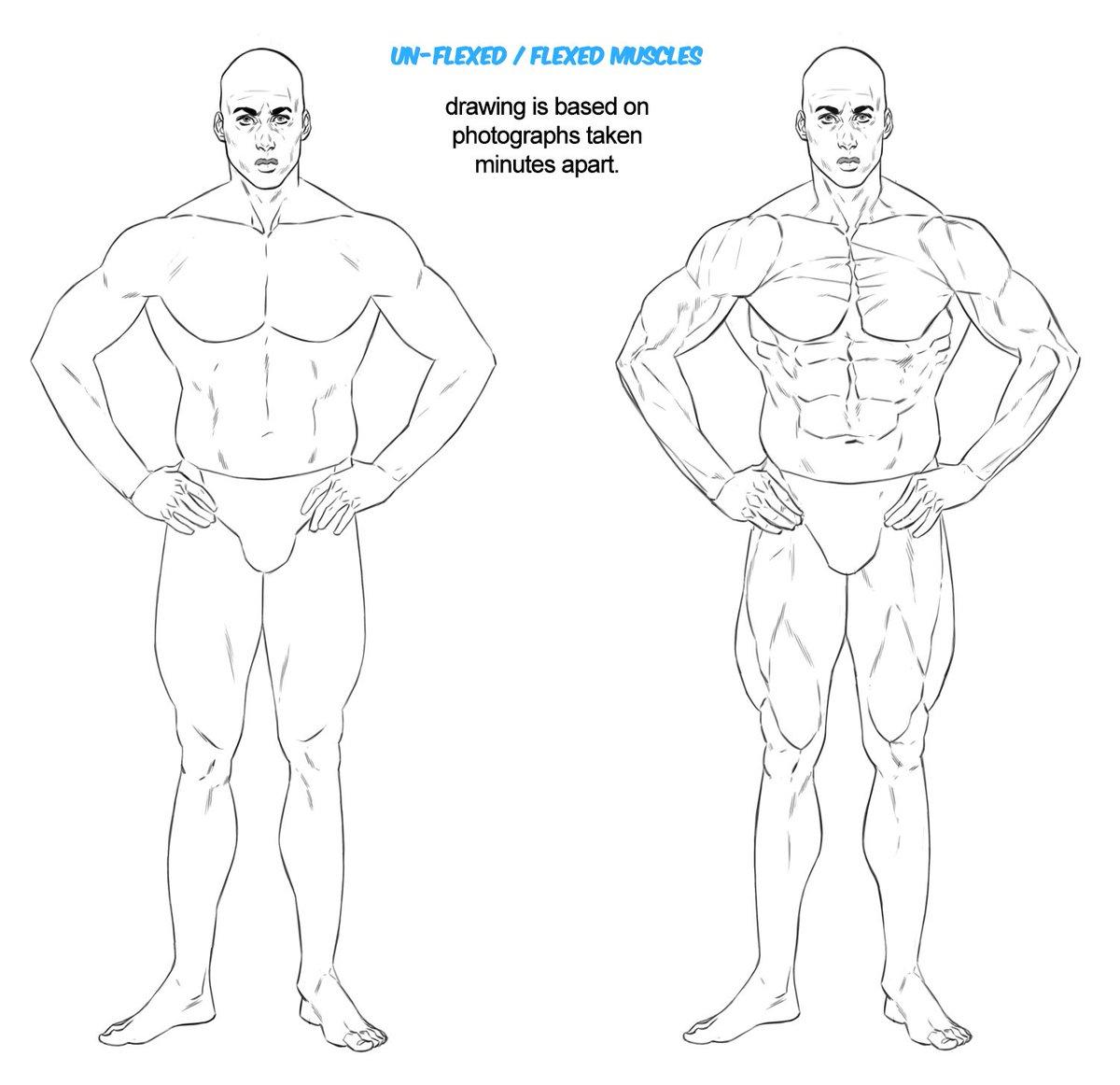 Masters of Anatomy (@MasterAnatomy) | Twitter
