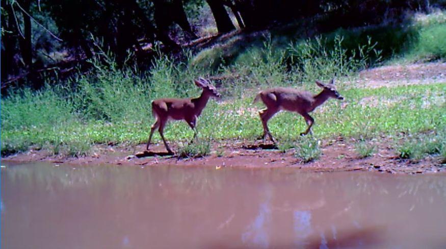 Watch: Animals roam around near the San Pedro River in Southern Arizona https://t.co/09gbWIUjmN