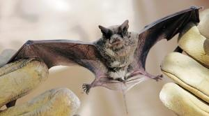Bat tests positive for rabies at Grand Canyon https://t.co/ZVa78fPcN5