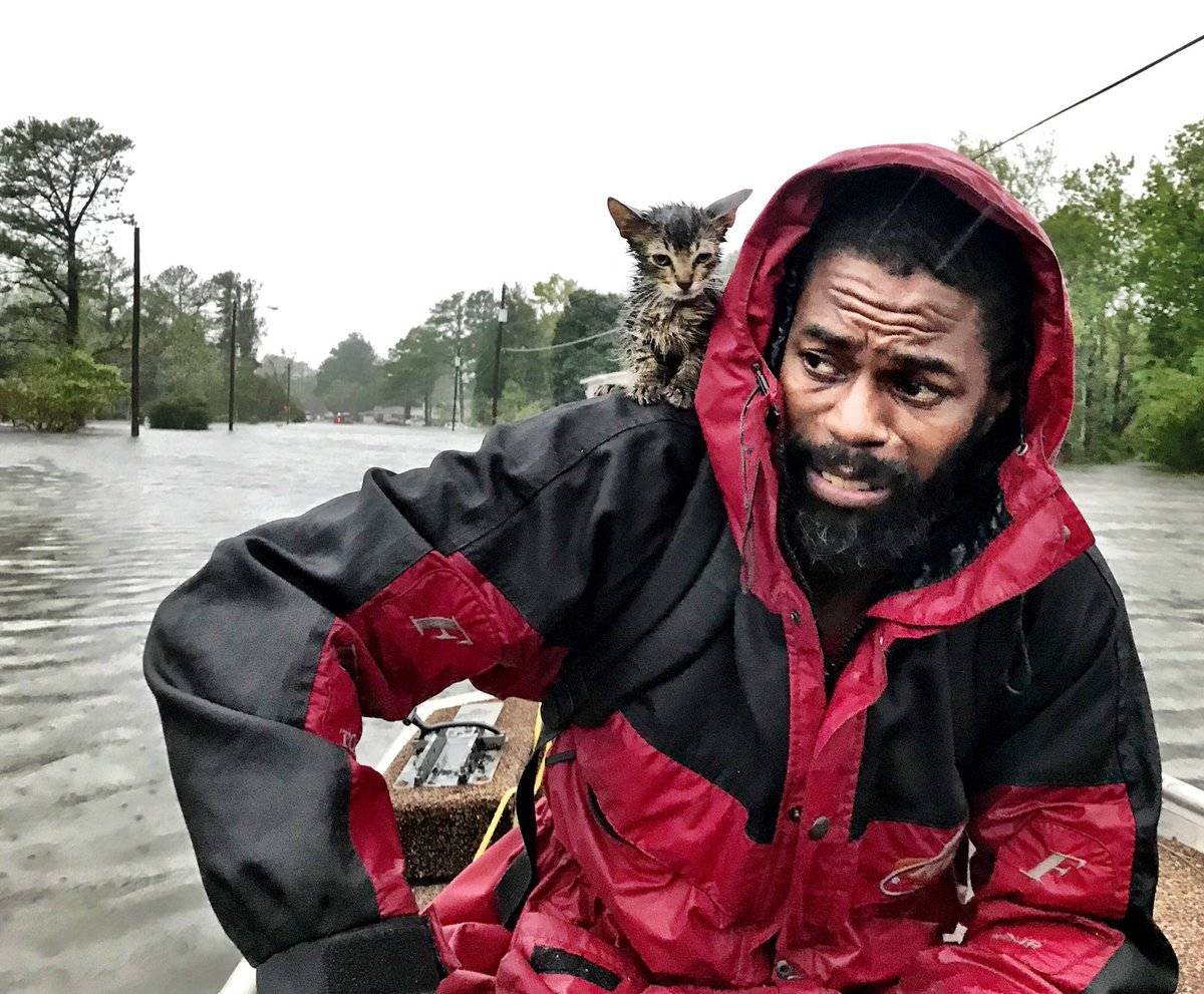Man Rescues Kitten From Hurricane