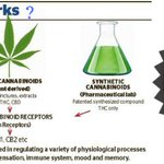 #Dual_Diagnosis_Disorders 2018 #Cannabis #Endocannabinioids #Phytocannabinoids #Syntheticcannabinoids #Immune_system https://t.co/8Adqy6GPX3