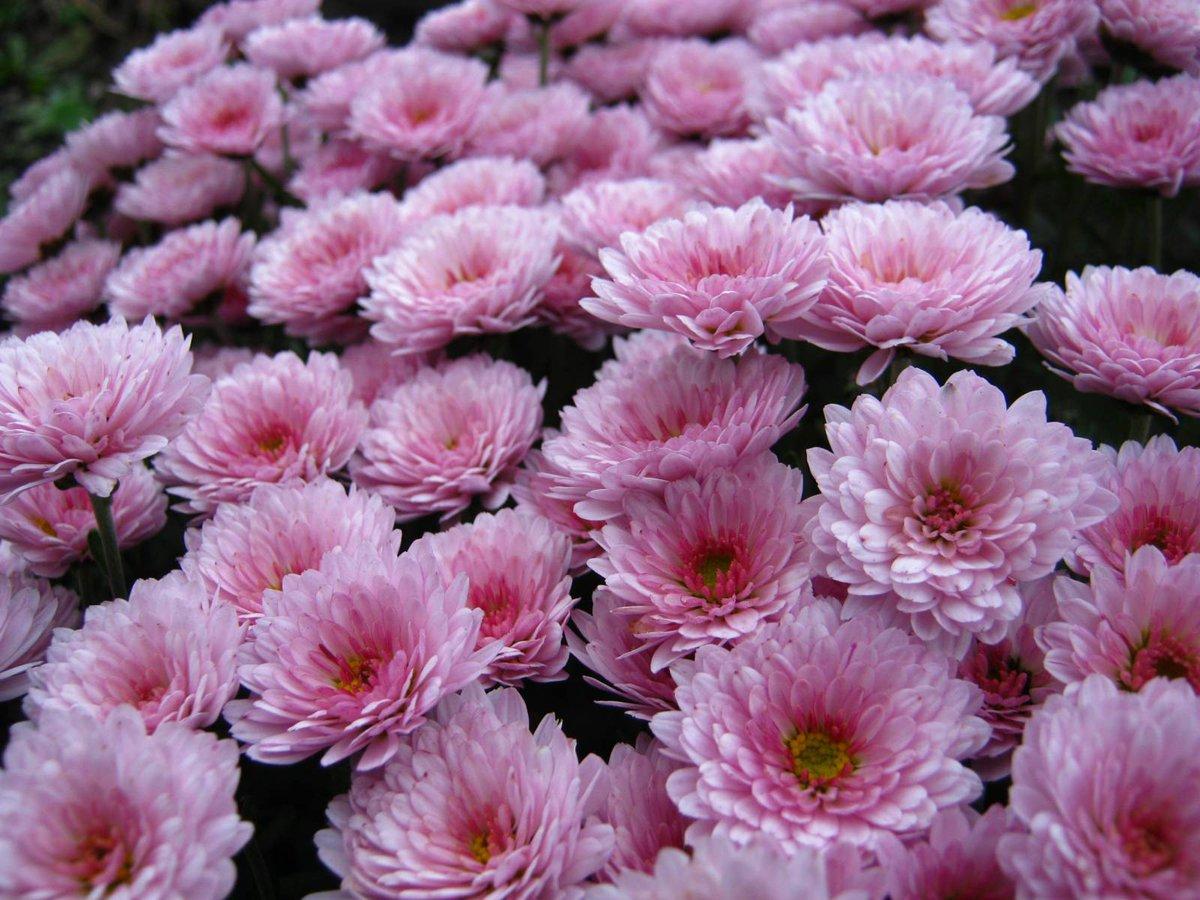 Цветы дубки цена