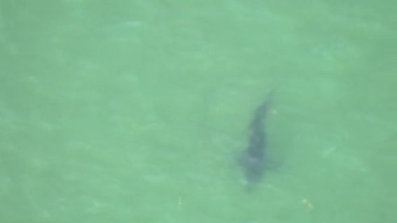 Police: Man dies after shark attack off Cape Cod Photo