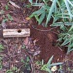 昆虫採集したら知って欲しい!カブト・クワガタが亡くなった時の対処法
