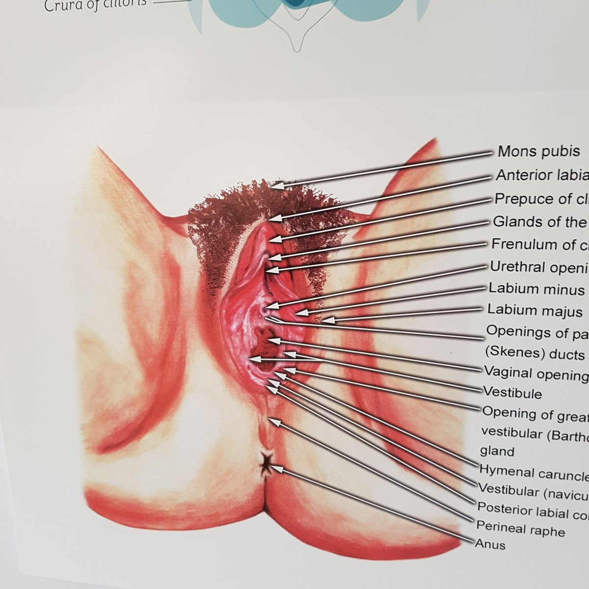 närbild creampie Porr