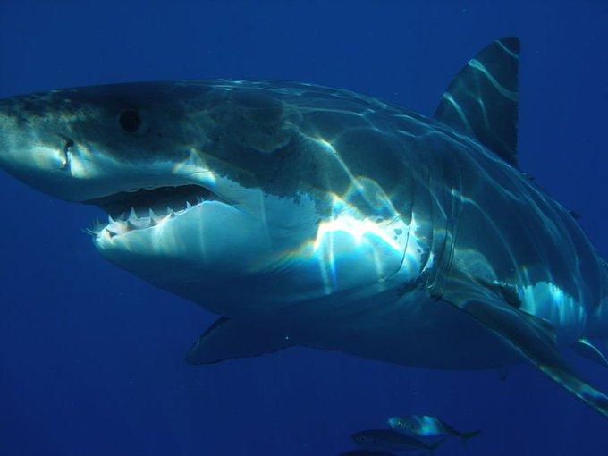 Cape Cod National Seashore Statement on Fatal Shark Attack Photo