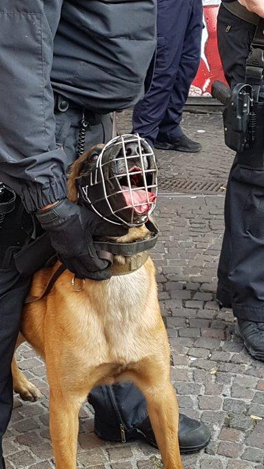 #ge1609 #nonazisge @polizei_nrw_ge Ein Hundeführer, der seinen blutenden Hund nicht aus dem Dienst nimmt? Was stimmt da denn nicht. Das ist keine Momentaufnahme, unsere Fotostrecke war länger. @PETADeutschland Foto
