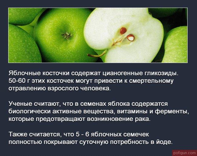 округлой формы, интересные факты о яблоке фото теплая длинная шуба