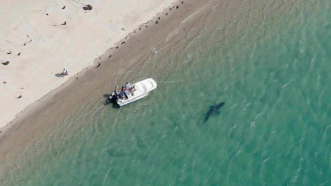 Authorities ID man killed in shark attack off Cape Cod Photo
