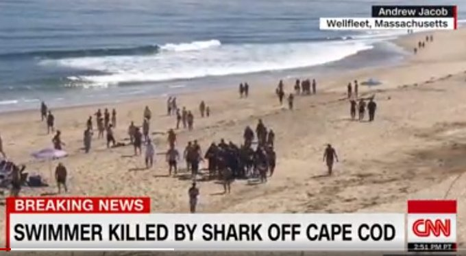 Swimmer dies after shark attack at Cape Cod Photo