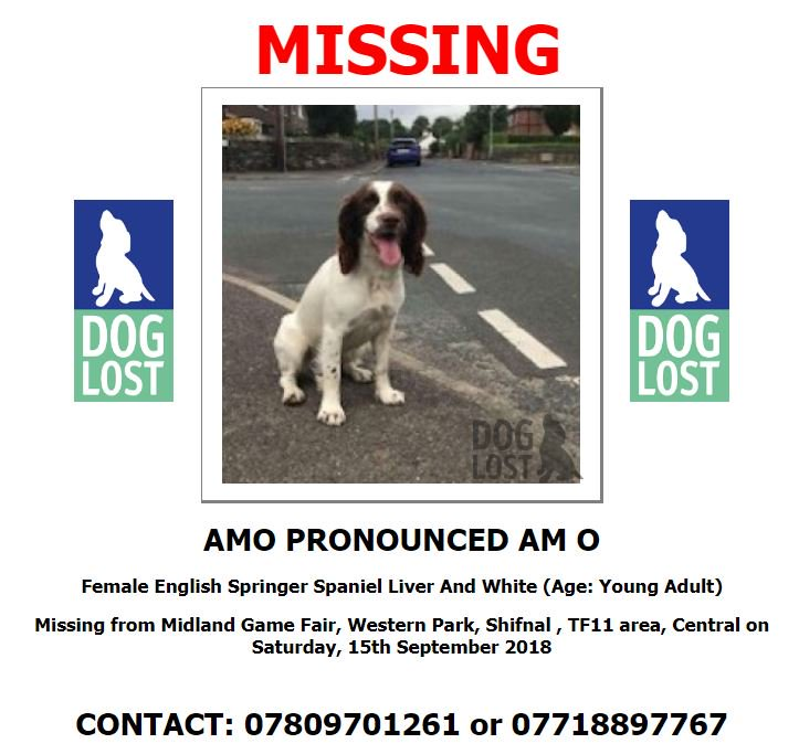 Please please retweet and help us find Amo! She went missing at The Midland Game Fair on Saturday 15th September! £500 REWARD! @CountrymanFairs #findamo @DoglostUK #lostdog <br>http://pic.twitter.com/eKcuiarf3E
