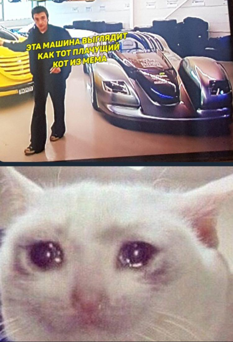 Best Ever Crying Cat With Phone Meme - Cat Picture