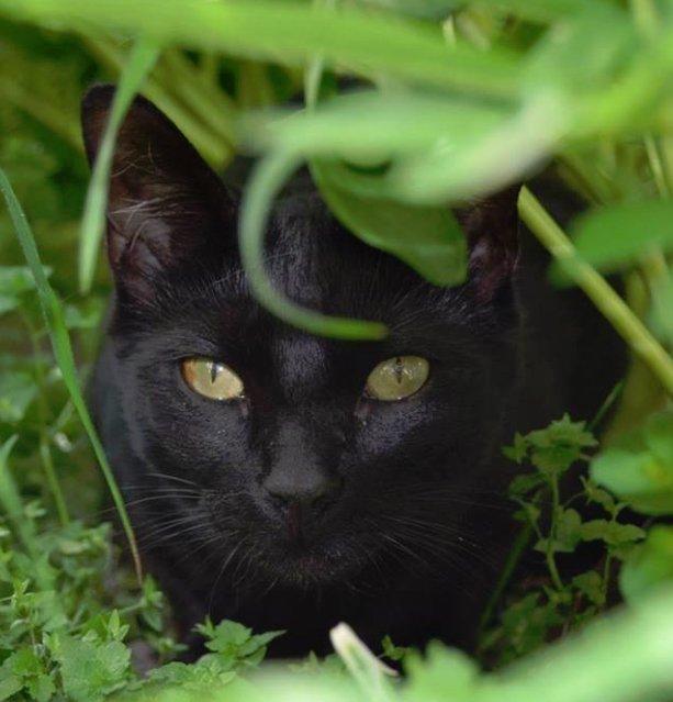 usé de la chatte noire