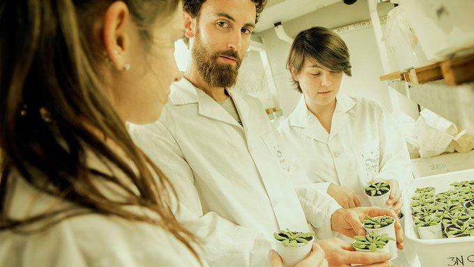 Investigadores del #CONICET en el Instituto de Biología Molecular y Celular de Rosario (IBR, CONICET-UNR), lograron una variante genética en la planta modelo arabidopsis thaliana, que permite controlar el crecimiento de las plantas. #BuenLunes Foto