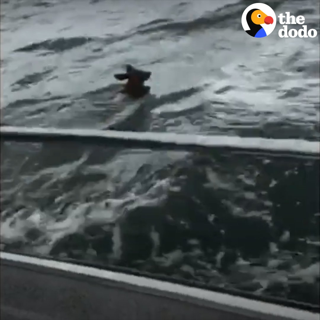 These people saw a fawn struggling to swim during a storm and jumped in their boat to help 💪